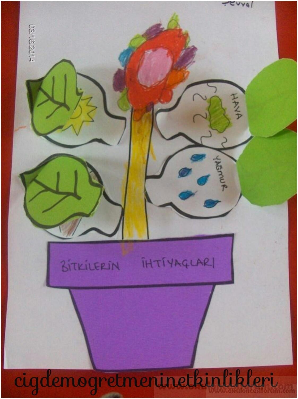 Bitkilerin Ihtiyaclari Okul Oncesi Etkinlikleri
