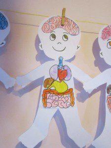 iç organlarım