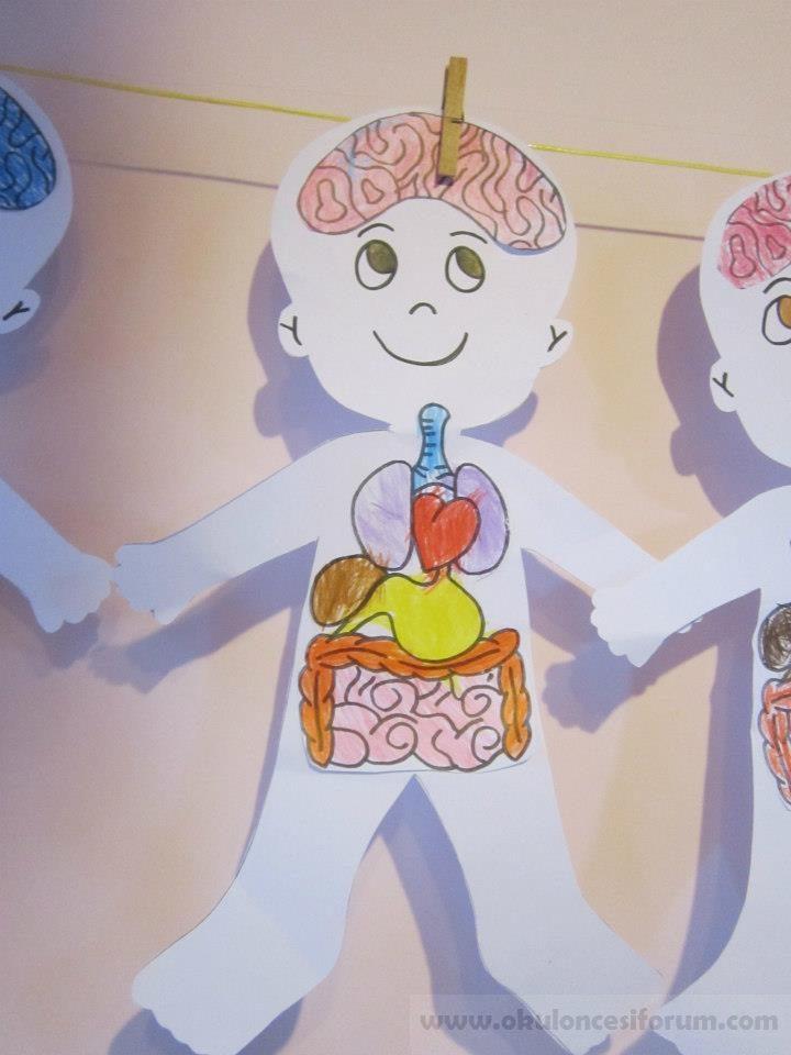 Iç Organlarımızı Tanıyalım Okul öncesi Etkinlikleri