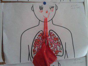 solunum sistemi1