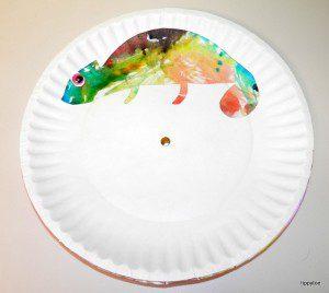 renkli bukalemunlar 4