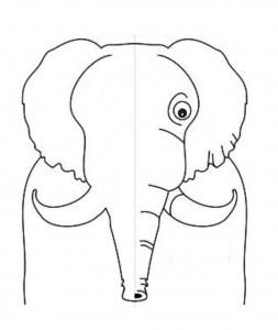simetri çalışması hayvanlar 17