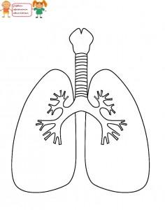 akciğer boyama
