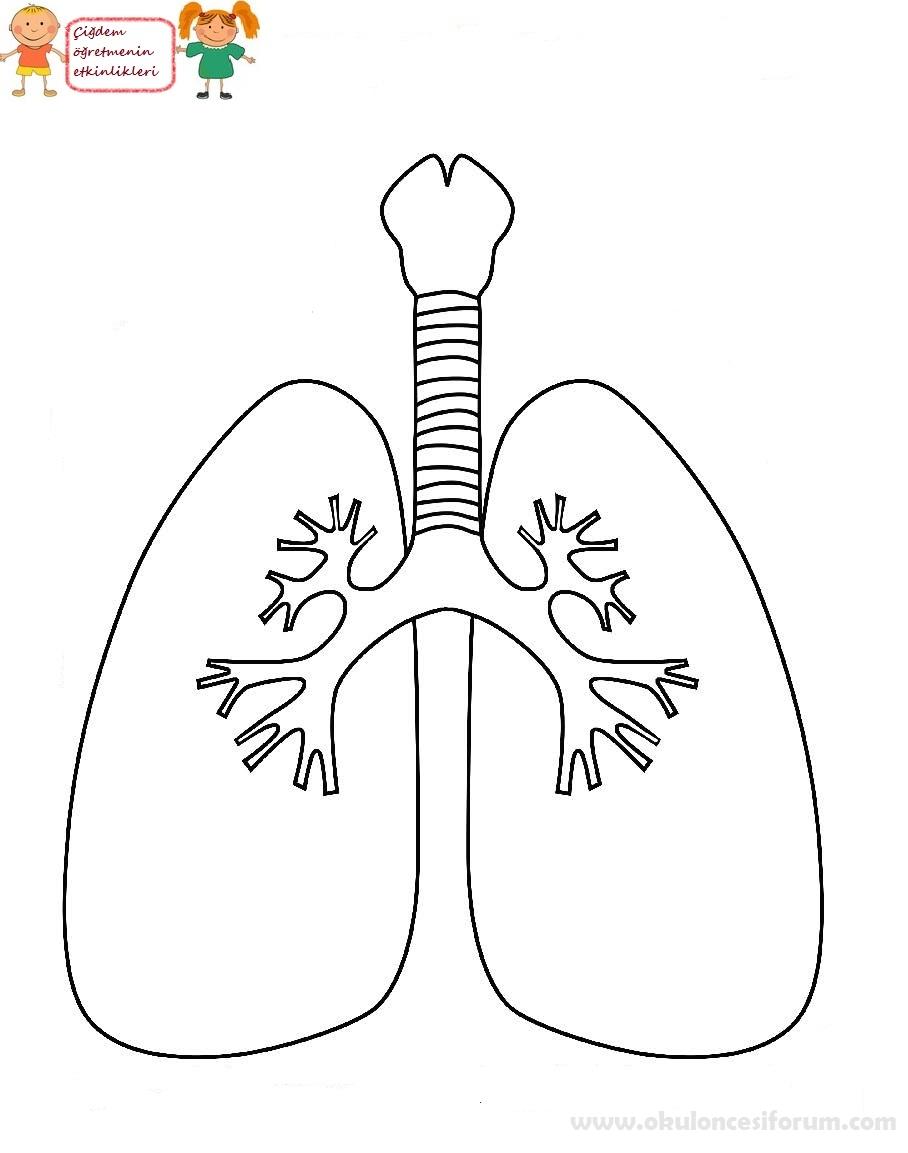 Yeşilay Haftası Sigara Sağlığa Zararlıdır Projesi Okul öncesi