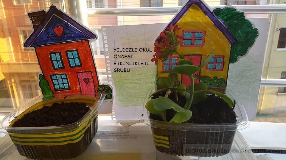 Okul öncesi Eğitimde Tohum çimlendirme Sanat Etkinliği Okul öncesi