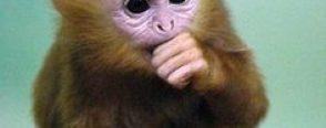 Maymun dansı :)