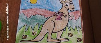 Bebek Kanguru annesinin cebinde…