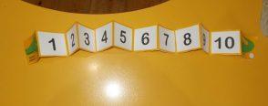 Akordeon Timsah sayı doğrusu